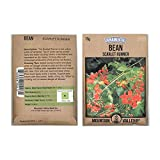 Scarlet Runner Pole Bean Seeds - 15 Gram Packet - Non-GMO, Heirloom - Vegetable Garden Seeds - Also Called: White Dutch Runner