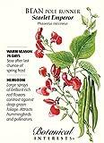 Scarlet Emperor Runner Pole Bean Seeds - 25 grams