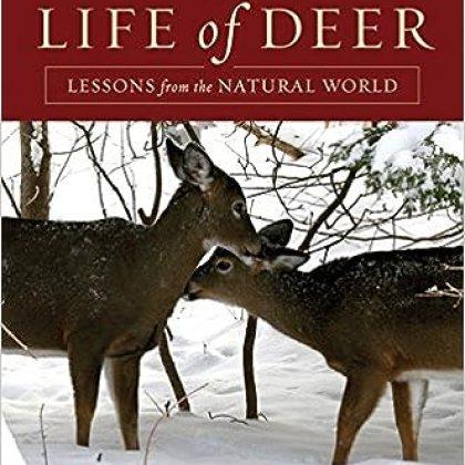the-hidden-life-of-deer