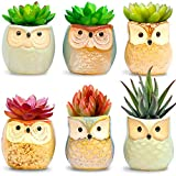 Amaze Owl Assorted Artificial Succulent Plants and Owl Planters | Set Of 6 Mini Faux Plants and Ceramic Pots | Indoor Office Table Decorations| Housewarming Ideas| Living Room Table Shelf Desk Decor