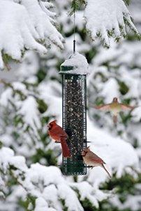 Squirrel-Buster-Classic-Squirrel-proof-Bird-Feeder-w4-Feeding-Ports-24-pound-Seed-Capacity