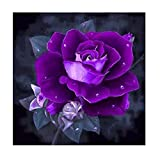 Allywit 5D Embroidery Paintings Rhinestone Pasted DIY Diamond painting Cross Stitch (D)
