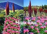 Rare Flower seeds Roter Teide Natternkopf - Echium wildpretii - 50 Samen-Tree seeds - Tower of Jewels Home & Garden