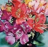 25+ Alstroemeria Peruvian Lily Mix Flower Seeds / Perennial