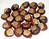 Horse Chestnuts - Quarter Size - Twenty-Five Nuts