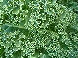 Kale - Borecole -VATES Blue Curled - 1600 Seeds