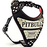 Bestia 'Metal Genuine Leather Personalized Dog Harness, Large Breeds ONLY, Cane Corso, Rottweiler, Boxer, Presa, Bullmastiff, Dogo, 100% Leather, Soft Padded.
