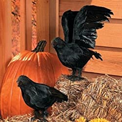 Realistic Feathered Crows -Set of 2 - Great Halloween Prop! by Unknown
