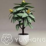 Seeds Shopp 100Pcs Aphelandra squarrosa Seeds Beautiful Flower Seed Mix Bonsai Flower Seeds Potted Plants for DIY Home & Garden