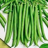 """230 Seeds, Bush Bean""""Slenderette"""" (Phaseolus vulgaris) Seeds by Seed Needs"""