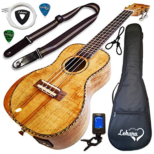 Ukulele from Lohanu Amazing Looking Spalted Maple with Armrest Glossy Finish with 3 Band EQ & Pickup with All Accessories Included! (Concert Size)