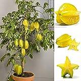 Potato001 50Pcs Thai Star Fruit Seeds Juicy Carambola Exotic Tree Seed High Germination