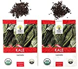 Organic Lacinato Kale Seeds - 2 Seed Packets! - Over 500 Open Pollinated Heirloom Non-GMO USDA Organic Seeds