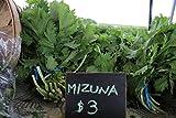 Mustard Seeds - Mizuna - Liliana's Garden