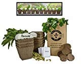 Mr. Sprout & Co Large Herb Kit: 10 Seed Varieties - Medicinal and Culinary Herb Garden Kit - Basil, Parsley, Cilantro, Mint, Chives, Sage, Thyme, Catnip, Chamomile, and Echinacea