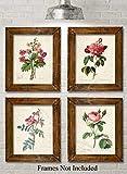 Paris Botanicals - Set of Four Photos (8x10) Unframed - Makes a Great Gift Under $20 for Bedroom/Bathroom Decor