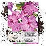Seed Needs, Pink Four O' Clock (Mirabilis Jalapa) 60 Seeds