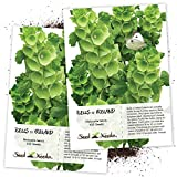Seed Needs, Bells of Ireland (Molucella laevis) Twin Pack of 400 Seeds Each