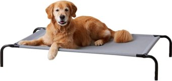 Best Chew Proof Dog Bed For Your Chewing Friend