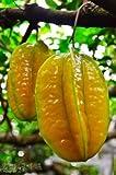 Averrhoa Carambola (Kari Starfruit) Tropical Fruit Trees