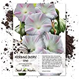 Package of 100 Seeds, Shiva Morning Glory (Ipomoea purpurea) Non-GMO Seeds By Seed Needs