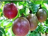 """Passion Fruit """"Possum Purple"""" Price Includes Four (4) Plants"""