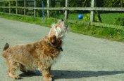 The-Company-of-Animals-Pet-Correctors