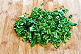 Cilantro SLOW BOLT SEED, Heirloom, Organic 20+ Seeds, Non Gmo, Herb/spice