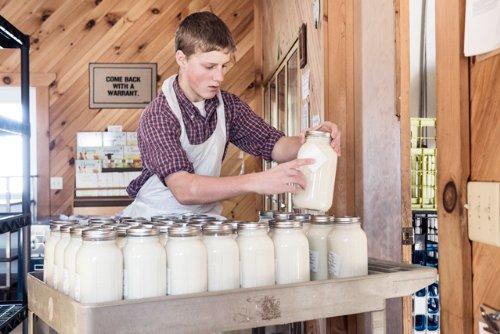 Kefir Grains - Living Probiotic Enriched 'As seen on TV'