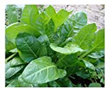 SPINACH - PERPETUAL - 14 GRAM ~ 700 SEEDS