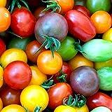 Rainbow Cherry Tomato Mix Seeds Colorful Heirloom Blend bin94 (50 Seeds)