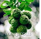 New Kaffir Lime seeds,Kreen Lemon 30+ Seeds