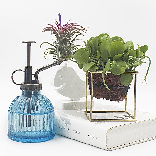 Plant Mister Ebristar 6 5 Tall Vintage Style Decorative Glass Water Spray Bottle With Top Pump Small Watering Can