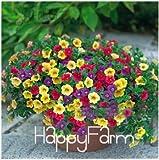 Lemon Slice Superbells Calibrachoa Petunia Annual Flower Seeds, 100 Seeds a Pack, 24 Colors to Choose,#ZZSOIT