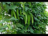 Winged Bean, psophocarpus Tetragonolobus, 15 Seeds per Pack, Organic, GMO Free, Heirloom