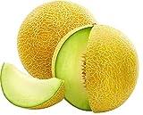 25 Seeds Galia Melon