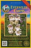 Everwilde Farms - 2000 Palmer's Penstemon Native Wildflower Seeds - Gold Vault Jumbo Seed Packet
