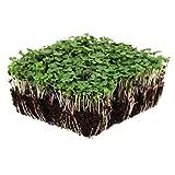 Basic Salad Mix Microgreens Seeds   Non-GMO Micro Green Seed Blend   Broccoli, Kale, Kohlrabi, Cabbage, Arugula, More (1 Pound)