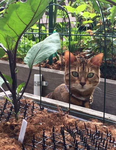 Repellent Cat Scat Outdoor Garden Mat