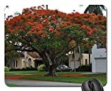 Mouse Pad - Flamboyant Flowers Red Tree Delonix Regia