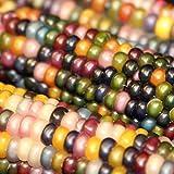 Bornbayb 100 Pcs/Pack Sweet Corn Seeds Non-GMO Seeds Indian Fruit Corn Seeds, 4 Varieties