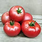 30+ ORGANICALLY GROWN Julia Child Pink Tomato Seeds, Heirloom NON-GMO, Sweet, Large, Low Acid, Indeterminate, Open-Pollinated, Delicious, Productive, From USA
