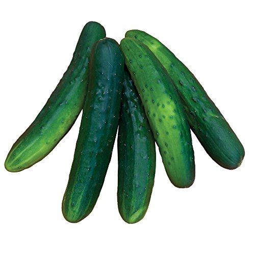 Burpee Salad Bush Slicing Cucumber Seeds 30 seeds