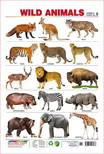 Amazon Com Spectrum Pre School Kids Learning Poster Educational Wild Animals Name Wall Chart Industrial Scientific