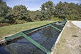 Photograph| Pond for adolescent fish, covered by chicken wire to deter poachers, at the state-run Twin Mountain Hatchery near Carroll, New Hampshire 1 Fine Art Photo Reproduction 36in x 24in