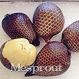 M-Tech Gardens Rare Snakefruit Salak Seeds for Growing (5 Seeds Pack)
