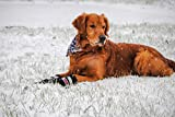 Bark Brite All Weather Neoprene Paw Protector Dog Boots with Reflective Straps in 5 Sizes! (Md (3.0 in.)) Travel Zipper Case Included!