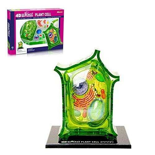 Animal Cells and Plant Cells Assembly Model for Elementary Education or Teaching Presentations (Plant cell)