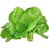 Dwarf Malabar Spinach Big Leaf 200 Pcs Seeds Non-GMO Heirloom Vegetable