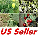 25 Seeds F109, Prickly Pear Cactus Opuntia Species Mix Seeds, Beautiful Plants
